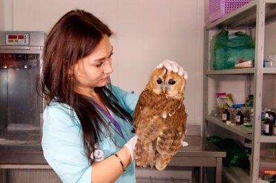 лечение диких птиц