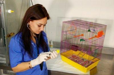 лечение волнистых попугаев