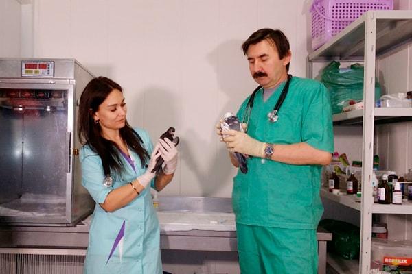 ветеринарный врач орнитолог