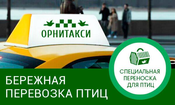 такси для птиц