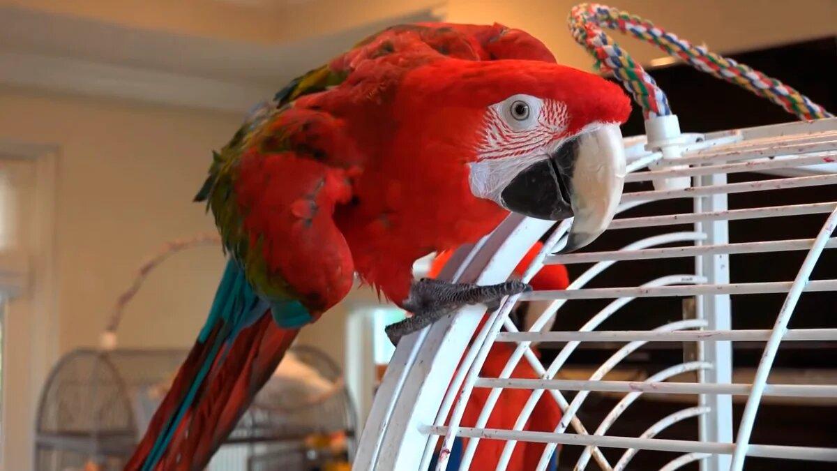 гостиница для птиц